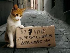 Cani e gatti tassati? La notizia non c'è, ma i Tg la danno