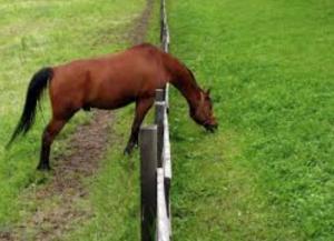 L'erba del vicino (I Tg di venerdì 8 maggio)