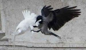 I corvi e le cornacchie (I Tg di lunedì 2 novembre)