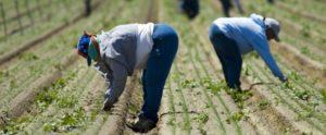 """Tutti schiavi e caporali, nella terra di Paola Clemente. Non solo contadini. Il """"caporalato industriale"""" è ancora inesplorato e i giornalisti precari sono prede sotto scacco"""