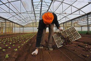 Operazione a Latina contro una delle maggiori sacche di sfruttamento del lavoro in agricoltura