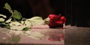 25 novembre a Rovigo. Con una rosa rossa
