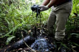 Trivelle nel cuore dell'Amazzonia