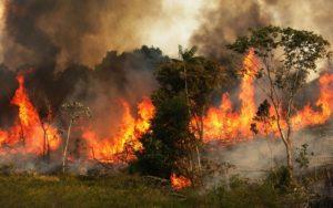 """Fiamme in Amazzonia, non è """"solo"""" un incendio devastante"""