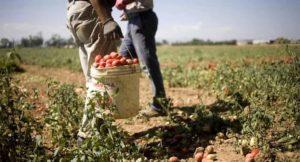 Fitofarmaci illegali, un commercio parallelo che macchia le produzioni agricole a Latina