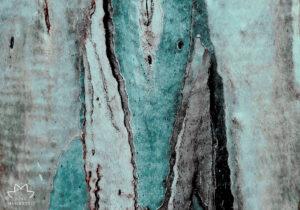 """Galleria d'Arte Moderna. """"La rivoluzione degli eucalipti"""", omaggio di di Nina Maroccolo per l'Earth Day 2021"""