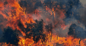 Sardegna devastata dagli incendi