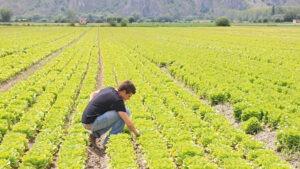 Dalla riforma agraria alla banca della terra