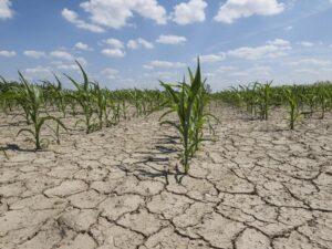 Mafia e siccità. A chi giova la distruzione dell'agricoltura siciliana
